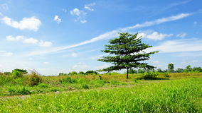Lone tree in the middle of a grass field Stock Photo