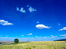 Lone Tree on Middle Mountain in Northwest Colorado. Lone Tree on Middle Mountian in Northwest Colorado under a big blue sky with little fluffy clouds Royalty Free Stock Images