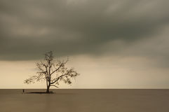 Lone Tree in the middle of the ocean, long exposure during sunse Stock Photography