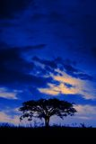 Lone tree at midnight Royalty Free Stock Photo