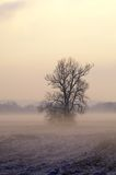 Lone tree in misty countryside Royalty Free Stock Image
