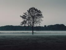 Lone tree in a misty landscape royalty free stock photos