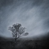 Lone Tree in a Misty Landscape Stock Images