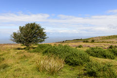 Lone tree in moor and Bristol channel, Exmoor Stock Image