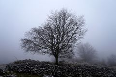 Lone tree in the morning Stock Photography
