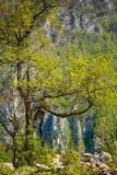 Lone tree on mountain cliff Stock Photos