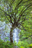 Lone tree on mountain cliff Stock Photography