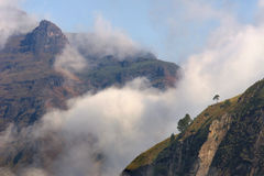 Lone tree on mountainside with morning mist Stock Images