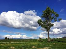 Lone tree in nature with a beautiful dramatic sky Royalty Free Stock Image