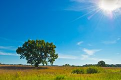 A lone tree is an oasis of cool shade in the hot steppe. In Ukrainian landscape stock photo