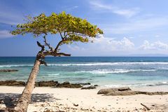 Lone tree by the ocean in paradise. Stock Image