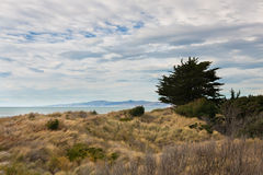 Lone tree on ocean shore Royalty Free Stock Photo