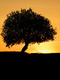 Lone Tree. One lonely tree after sunset Royalty Free Stock Photos