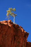 Lone Tree - Ormiston Gorge, Australia Royalty Free Stock Photos