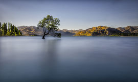 The lone tree over the lake Royalty Free Stock Photos