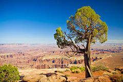 A Lone Tree Overlooking Canyonland Terrain Stock Images