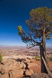 A Lone Tree Overlooking Canyonland Terrain Stock Photography