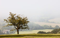 Lone tree overlooking a misty valley in autumn Royalty Free Stock Photo