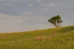 Lone tree på prärien Fotografering för Bildbyråer