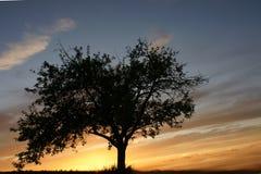 Lone tree på solnedgången Royaltyfria Bilder