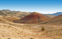 Lone Tree In Painted Hills. A lone tree sits in a field in the Painted Hills, Oregon Royalty Free Stock Photography