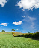 Lone Tree in Paso Robles Wine Country Scenery Royalty Free Stock Images