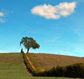 Lone Tree in Paso Robles Wine Country Scenery Stock Photo