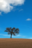 Lone Tree in Paso Robles Wine Country Scenery Stock Photos