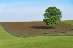 Lone tree Peaceful against Blue Sky. Lone Tree with Rolling Hills in Ohio. Holmes County Ohio is known for it`s Amish population and beautiful scenery royalty free stock photography