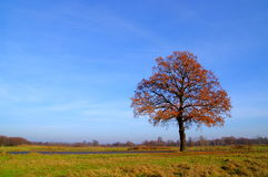 Lone Tree. Stock Photography