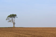 Lone tree with plowed field Royalty Free Stock Images