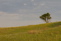 Lone tree on the prairie Stock Image
