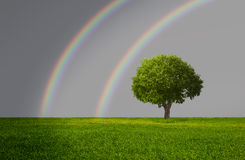 Lone tree with rainbow Royalty Free Stock Photos