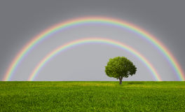 Lone tree with rainbow Stock Photo