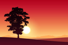 Lone Tree Stock Image