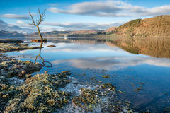Lone Tree Reflections On Cold And Icy Morning At Ullswater. Stock Photo