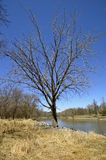 Lone tree on river bank Royalty Free Stock Photography