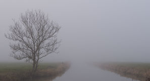 Lone Tree and River Shrouded in Fog Stock Photo