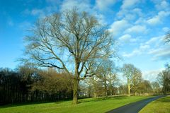 Lone tree and road. A lone tree in the grass near a road Royalty Free Stock Images