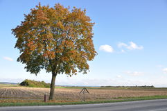 Lone tree at roadsidse Royalty Free Stock Photos