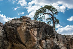 Lone tree on a rock outcropping Stock Image