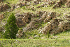 Lone tree rocks Stock Photography