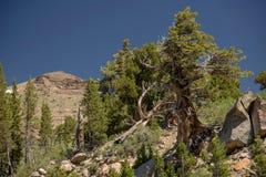 Lone Tree on Rocks Stock Photo