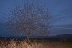 Lone tree in a rural area. Lone tree in a field in al rural area in autum and a nice sky at dusk Royalty Free Stock Photos