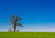 Lone tree rural landscape Royalty Free Stock Images