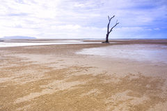 Lone tree on sandy beach. Rising sea levels caused by global warming eroding the coastline leave a dead tree standing by itself Royalty Free Stock Photos