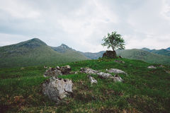 Lone Tree, Scotland Stock Photography