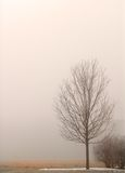 Lone tree shrouded in fog on a winter's day Stock Photography