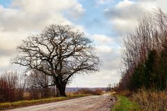 A lone tree at the side of the road. Along the edge of the field to go to a large tree along the path Stock Photos