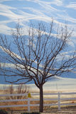A lone tree silhouette. A silhouette tree against a white fence Royalty Free Stock Photography